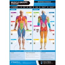 POSTERFIT MUSCLE GROUPS & EXERCISE CHART